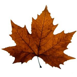 spooky leaf